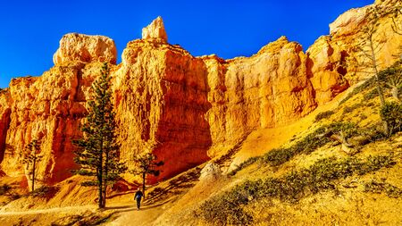 Hiking at Sunrise along the Vermilion Colored Hoodoos on the Navajo Trail in Bryce Canyon National Park, Utah, United States