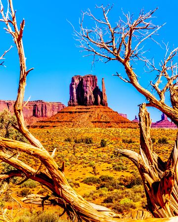 The towering red sandstone formation of West Mitten Butte behind a dead tree in the Navajo Nation's Monument Valley Navajo Tribal Park desert landscape on the border of Arizona and Utah, United States