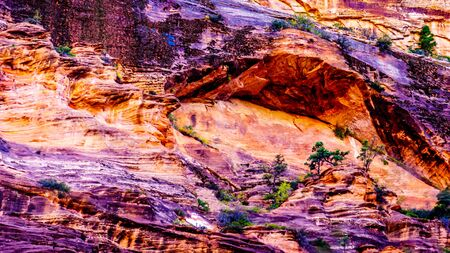 Cliff Overhang and Vegetation on the side Lady Mountain along the Emerald Pools Trail in Zion National Park, Utah, United States