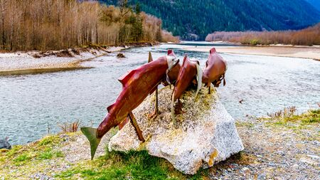 Sockeye Salmon display along the Squamish River in Brackendale Eagles Provincial Park a famous Eagle watching spot in British Columbia, Canada Stock Photo