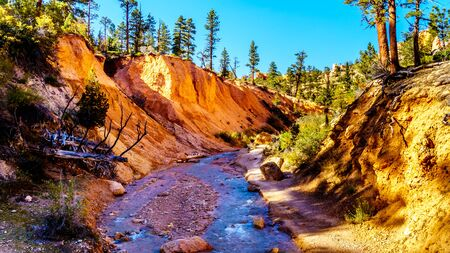 The Topic Ditch carved a path though the vermilion colored sandstone rocks downstream of the Tropic Ditch falls along Mossy Cave hiking trail in Bryce Canyon National Park, Utah, United States