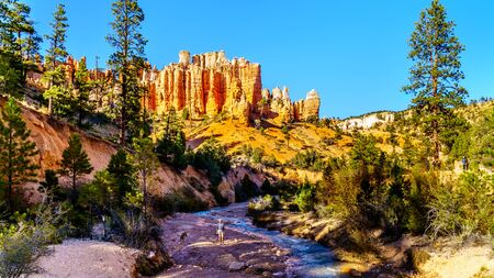 Water of the Tropic Ditch flowing through the vermilion colored Pinnacles and Hoodoos at the Mossy Cave hiking trail in Bryce Canyon National Park, Utah, United States Standard-Bild