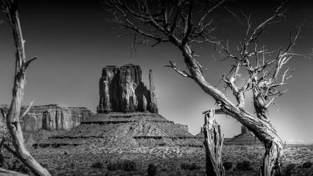 Black and White Photo of the red sandstone formation of West Mitten Butte behind a dead tree in Monument Valley Navajo Tribal Park desert landscape on the border of Arizona and Utah, United States