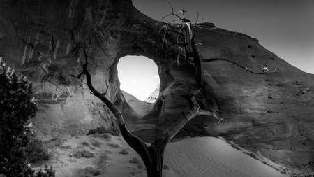 Black and White Photo of Dead Tree in front of The Ear of The Wind, a hole in a rock formation in Monument Valley Navajo Tribal Park on the border of Utah and Arizona, United States