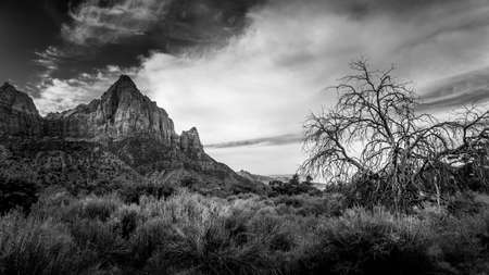 Black and White Photo of The Watchman mountain viewed from the Pa'rus Trail that meanders along and over the Virgin River in Zion National Park in Utah, USA Archivio Fotografico