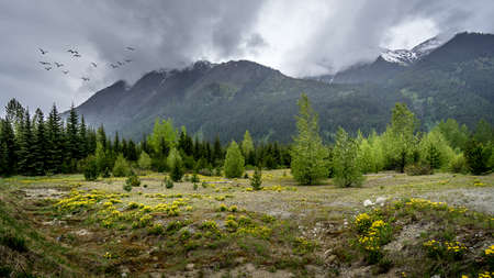 Flock of Birds under Dark Clouds over a field with Dandelions at the foot of the Coast Mountains along Highway 99, the Duffy Lake Road, between Lillooet and Pemberton in British Columbia, Canada Stok Fotoğraf