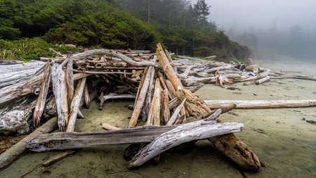 Driftwood washed on shore on the Fog covered sandy Beach of Cox Bay in Pacific Rim National Park on Vancouver Island, British Columbia