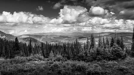 Black and White Photo of the Pine Forests in the Shuswap Highlands in British Columbia, Canada Фото со стока