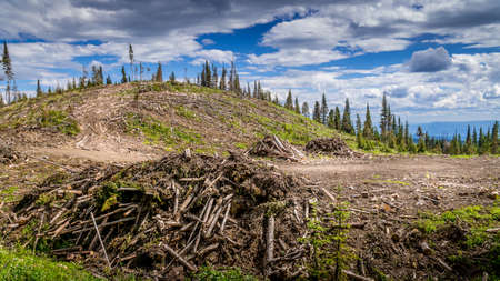 Industrial Clear Cut Logging in the Shuswap Highlands of British Columbia, Canada