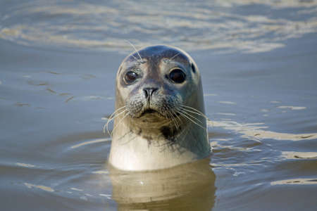 texel: Seal Stock Photo