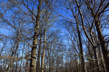 Blue sky in woodland Zdjęcie Seryjne