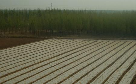 Suburban Farmland in Tianjin