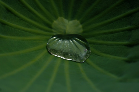 waterdrops: Water droplets and lotus