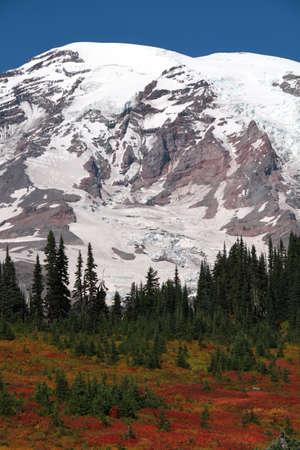 mt rainier: Mt. Rainier From Paradise