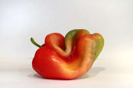 redish: An isolated redish green bell pepper.