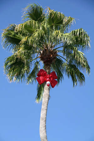 Decorated palm tree with red Christmas bow.