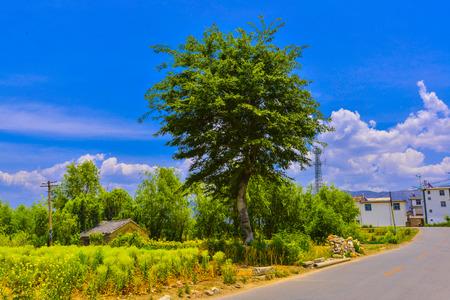 natural scenery photo