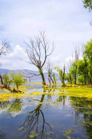 full willow: Erhai Lake scenery