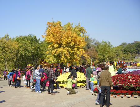 horticultural: Shenyang international horticultural Expo garden Chrysanthemum exhibition