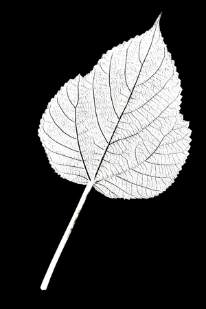 The structure of the leaf Stock Photo - 48450796