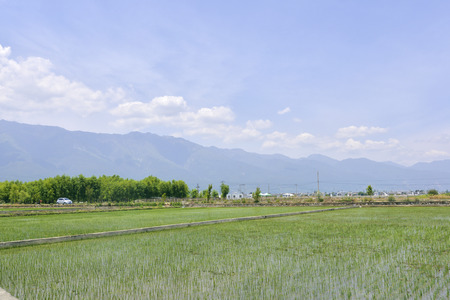 non cultivated land: Spring Stock Photo