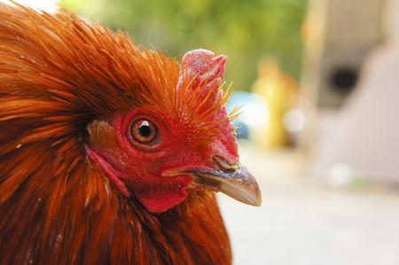 listless: beautiful cock close-up