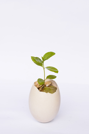 fragile economy: Investment concepts, eggs, eggs, eggs hatched out of the seedlings