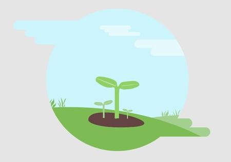 germinación: La germinación y el crecimiento de las plántulas Vectores