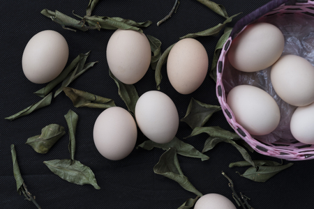red cross red bird: eggs in a basket on black background Stock Photo