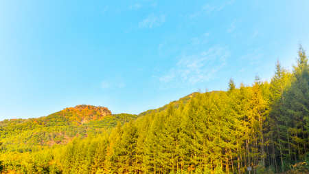 Forest landscape under blue sky in autumn. 版權商用圖片