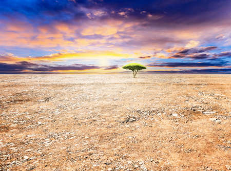 Sun shines on a tree on the dirt ground at sunset.