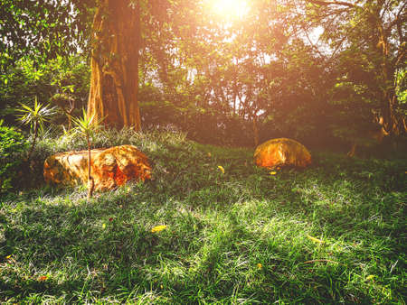 The early morning sun fell on the grass in the woods. 版權商用圖片