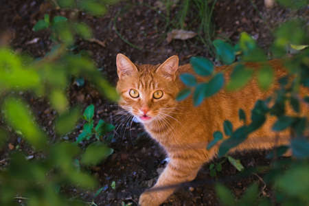 A yellow cat with staring eyes and grin outdoors.