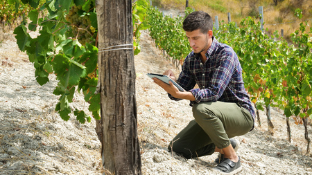 A man in a vineyard with his tablet after checking his grapes for traceability and for the production of his Italian wine. Concept of: agriculture, wine, drinks, bio, nature and technology Stok Fotoğraf