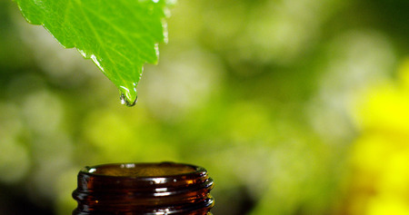 scents and aromas in aromatherapy for wellness and spa. concept of beauty. fragrant essential oil. essence drops fall from a leaf into a pool in a wellness center Reklamní fotografie