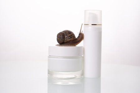 lose up, snail, crawling on a white background. Concept of: Moisturizing cream, perfect skin, snail snack.