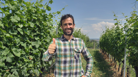 The farmers portrait relaxes into the camera, looks and checks the grape fields, the background of greenery Concept ecology, wine, bio product, testing, water, natural products, professional, farmers Banco de Imagens