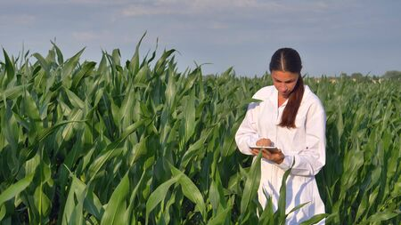 A plant specialist, examines the corn fields, a white coat makes a test analysis in a tablet, a background of greenery Concept ecology, bio product, inspection, water, natural products professional
