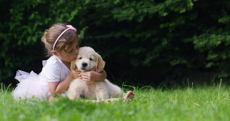 Cute toddler little two years old girl gives a golden retriever puppy on a green widow in a woods. Concept of love for nature, protection of animals, innocence, fun, joy, carefree childhood.