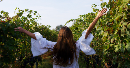 A young woman in a white dress walking among a vineyard and touching the plants 스톡 콘텐츠