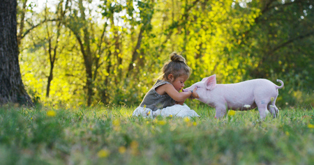 Piggy piglet on a green meadow. concept of sustainability, love of nature, respect for the world and love for animals. Ecologic, biologic, vegan, vegetarian Stockfoto