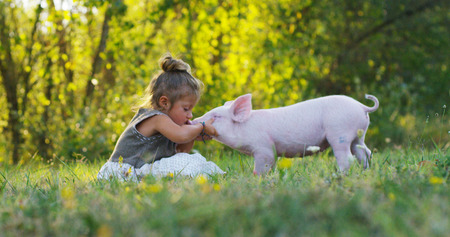 Piggy biggetje op een groene weide. concept van duurzaamheid, liefde voor de natuur, respect voor de wereld en liefde voor dieren. Ecologisch, biologisch, veganistisch, vegetarisch
