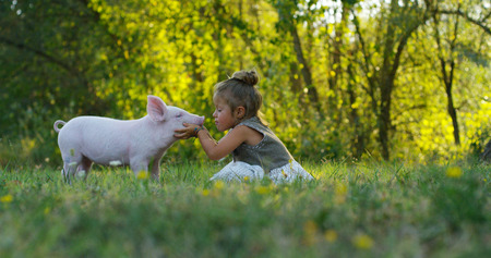 Piggy piglet on a green meadow. concept of sustainability, love of nature, respect for the world and love for animals. Ecologic, biologic, vegan, vegetarian Stock fotó