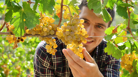 Man farmer in September for the harvest. biological id concept, organic food and fine handmade wine