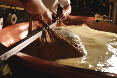 A cheesemaker prepares a form of Parmesan cheese using fresh and organic milk. The processing is done following the ancient Italian tradition.