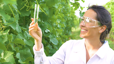 A specialist girl checks the grape fields, holds a pipette, a flask with water, takes a test for the moisture of the leaf, in a white coat, in goggles.