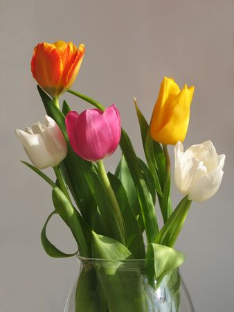 beatuful: The bouquet of five variegated beatuful tulips
