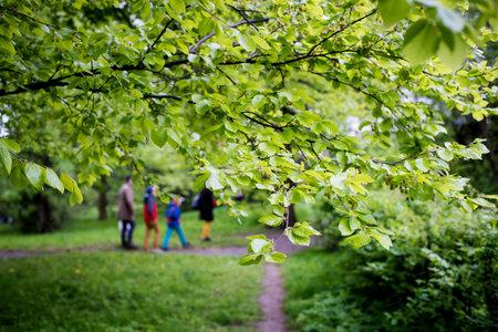 garden walking path in springtime