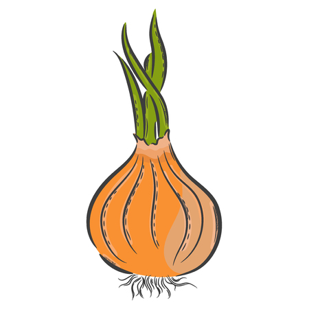 onion rings: Vector hand drawn illustration. Isolated onion. Detailed vegetarian food drawing. Farm market product.