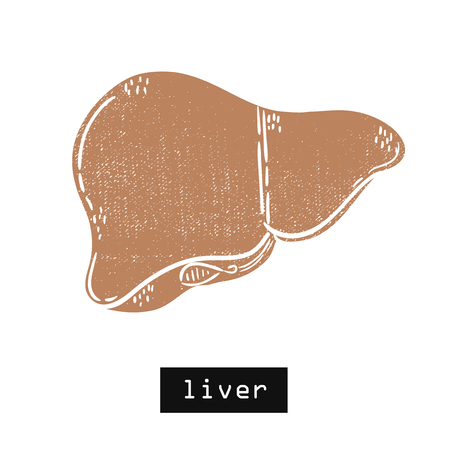 Vector hand drawn illustration. Liver body. Idea for poster, postcard, design. Illustration